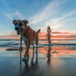 Image of Woman Wearing Bikini Walking on Beach Shore With Adult Brown and White Boxer Dog during Sunset