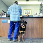 Image of Health Insurance for Pet
