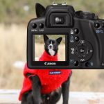 Image of Camera Dog Photo Image Exposure Picture