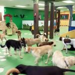 Image of Dogs in a Day Care